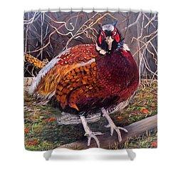 Ring Neck Pheasant Shower Curtain