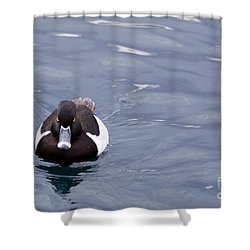 Ring-necked Duck Shower Curtain by Afrodita Ellerman