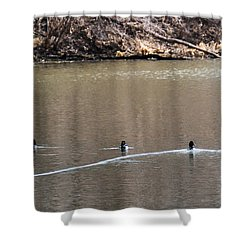 Ring-necked Duck Formation Shower Curtain by Edward Peterson