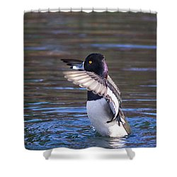 Ring-necked Duck Wings Up Shower Curtain