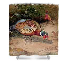 Ring Necked Pheasant Shower Curtain by Joseph Wolf