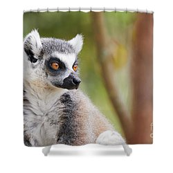 Shower Curtain featuring the photograph Ring-tailed Lemur Closeup by Nick Biemans