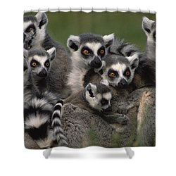 Shower Curtain featuring the photograph Ring-tailed Lemur Lemur Catta Group by Gerry Ellis