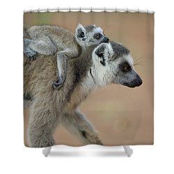 Ring-tailed Lemur Mom And Baby Shower Curtain by Cyril Ruoso