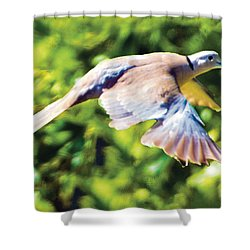 Ringed Neck Dove In Flight Shower Curtain