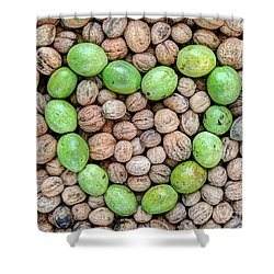 Ripe And Unripe Walnuts Shower Curtain by Michal Boubin