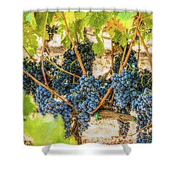 Ripe Grapes On Vine Shower Curtain