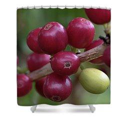 Ripe Kona Coffee Cherries Shower Curtain