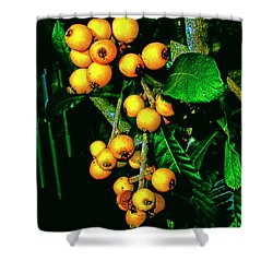 Ripe Loquats Shower Curtain