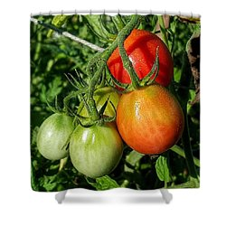 ripening #photography #garden Shower Curtain by Andrew Pacheco