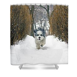Ripley's Run Shower Curtain by Keith Armstrong
