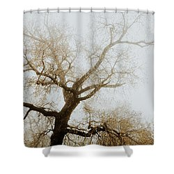 Shower Curtain featuring the photograph Rising by Iris Greenwell