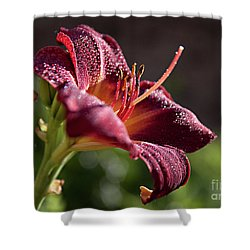 Rising To The Sun Shower Curtain by Sherry Hallemeier