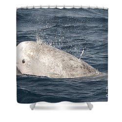 Risso Dolphin Shower Curtain