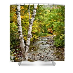 River Birch Shower Curtain