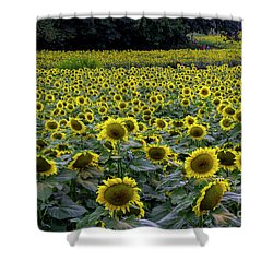 River Of Sunflowers Shower Curtain