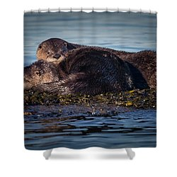 River Otters Shower Curtain by Randy Hall