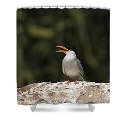 River Tern Shower Curtain