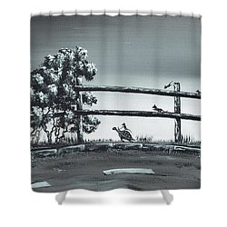 Road Runner. Shower Curtain