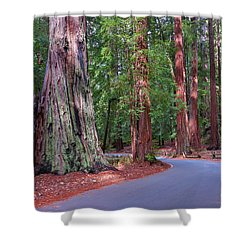 Road Through Redwood Grove Shower Curtain