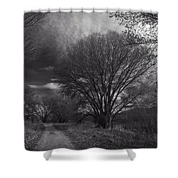 Road Through The Cottonwoods Shower Curtain