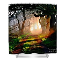 Road Through The Woods Shower Curtain