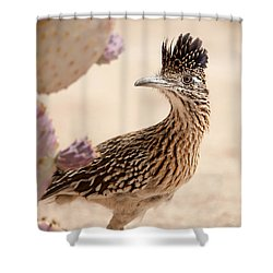 Shower Curtain featuring the photograph Roadrunner by Dan McManus