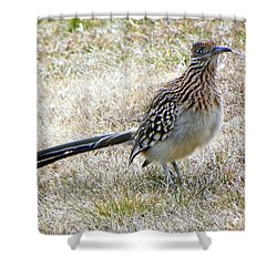 Shower Curtain featuring the photograph Roadrunner New Mexico by Joseph Frank Baraba