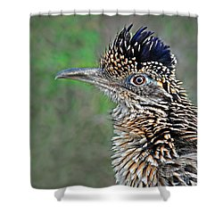 Roadrunner Portrait Shower Curtain by Dave Mills