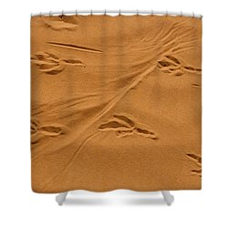 Roadrunner Tracks In The Sand Shower Curtain
