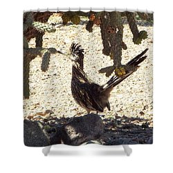 Roadrunners Shade-time Shower Curtain