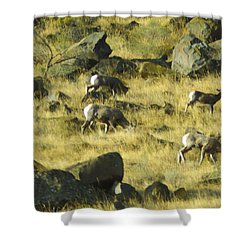 Roaming Free Shower Curtain by Dale Stillman