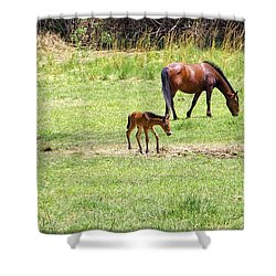 Roaming Freely Shower Curtain