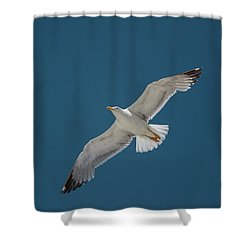 Roaming The Sky Shower Curtain