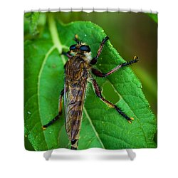 Robber Fly 1 Shower Curtain