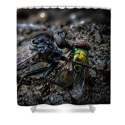 Robber Fly Eating Green Bottle Fly Shower Curtain by Bob Orsillo