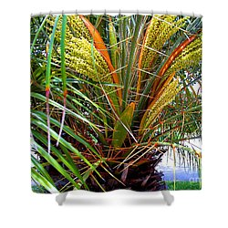 Shower Curtain featuring the photograph Robillini Palm In Bloom by Merton Allen