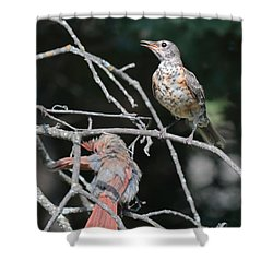 Robin And Cardinal 2664 Shower Curtain