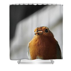 Robin Closeup Shower Curtain