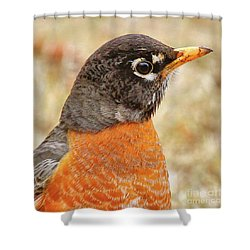 Shower Curtain featuring the photograph Robin by Debbie Stahre
