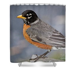 Shower Curtain featuring the photograph Robin by Douglas Stucky