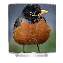 Shower Curtain featuring the photograph Robin II by Douglas Stucky