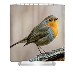 Robin In Spring Shower Curtain by Torbjorn Swenelius