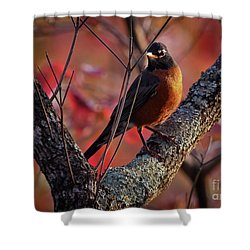 Shower Curtain featuring the photograph Robin In The Dogwood by Douglas Stucky