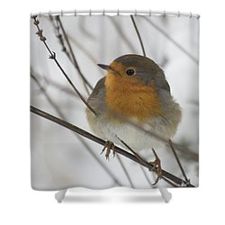 Robin In The Snow Shower Curtain
