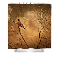 Robin Shower Curtain by Lois Bryan