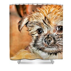 Shower Curtain featuring the photograph Robin by Mindy Newman