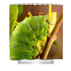 Shower Curtain featuring the photograph Robin Moth Caterpillar by Claire Bull