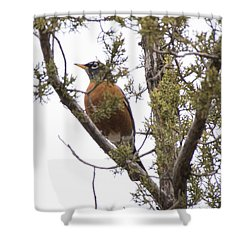 Robin On The Lookout Shower Curtain