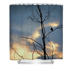Shower Curtain featuring the photograph Robin Watching Sunset After The Storm by Sandi OReilly